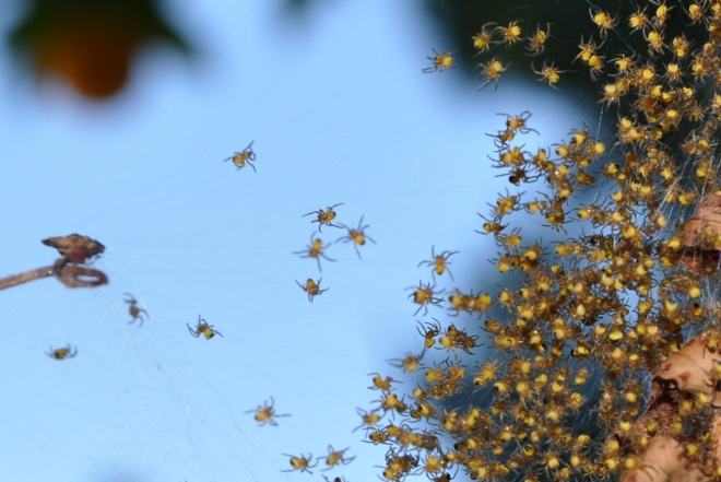 spiders up close 4-18-2013 12-46-40 PM