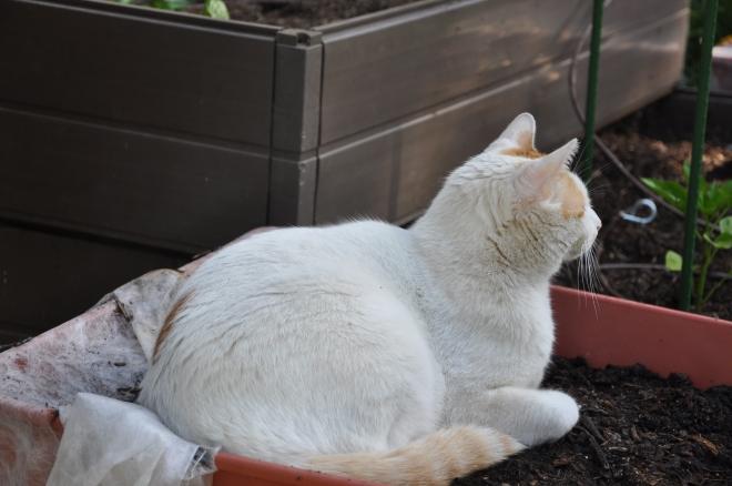 keeping the seedlings warm