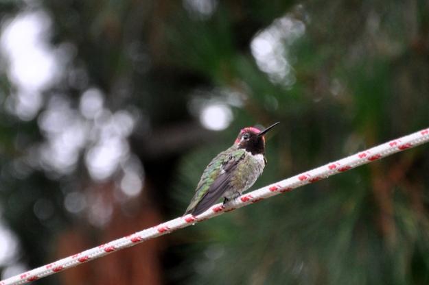 hummingbird in the rain