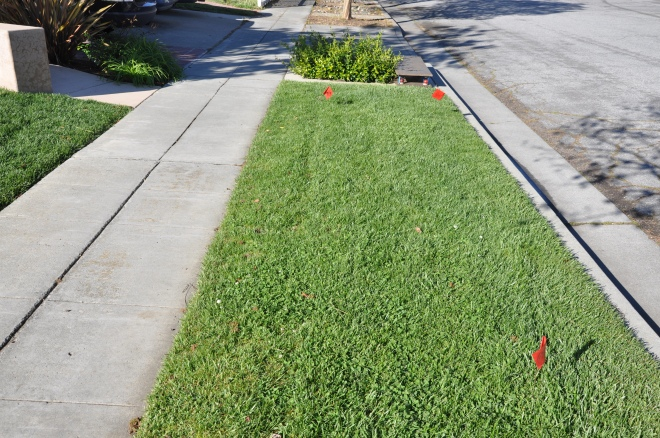 grassy sidewalk strip