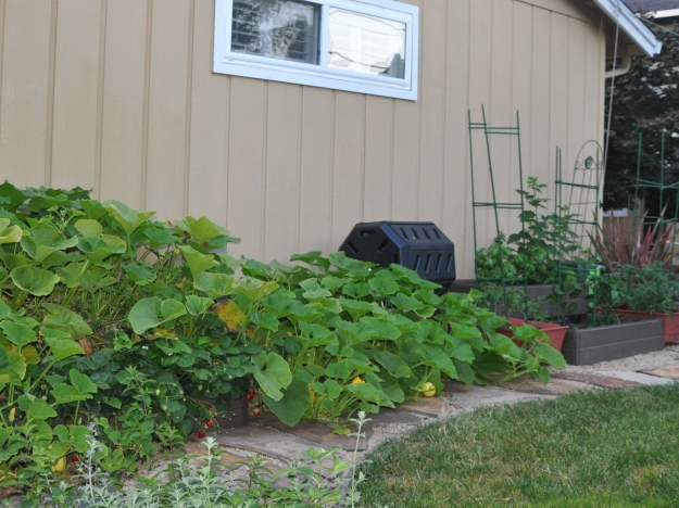 Vegetable Garden Summer Solstice