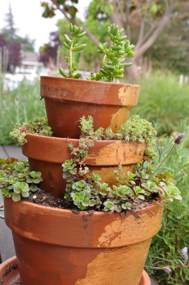 Tower of Sedum