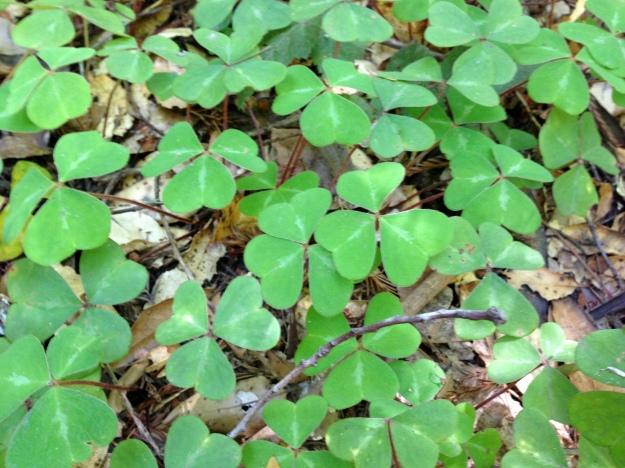 felton clover