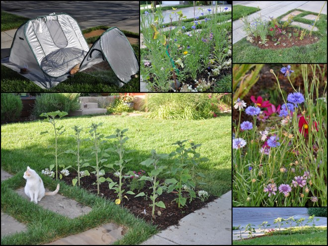 garden triangle collage