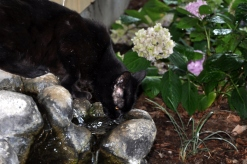 Drinking from the fountain