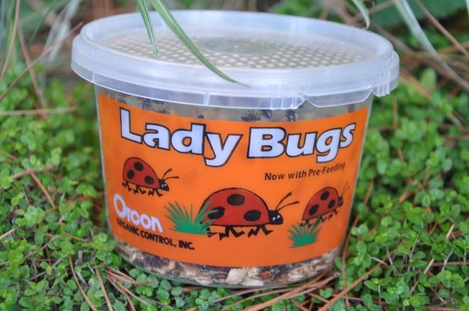 ladybug container
