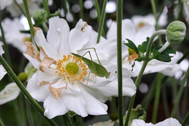 katydid and spider