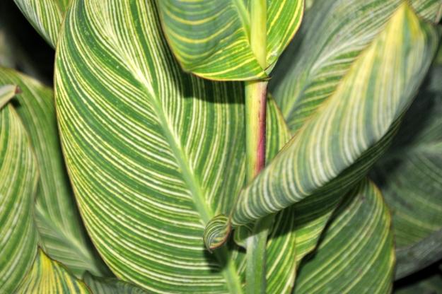 striped green foliage