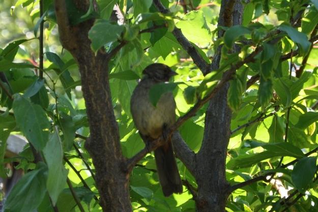 bird in a fruit tree