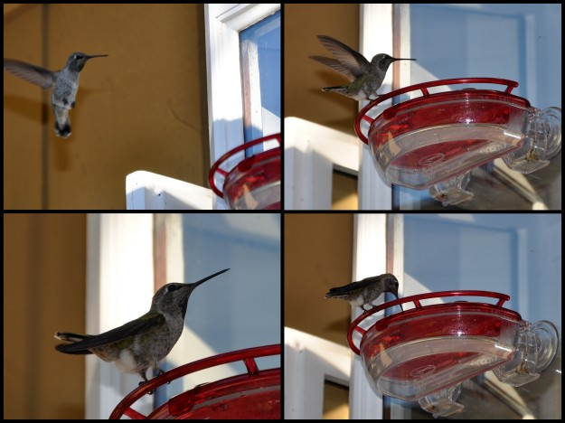 hummingbird feeder collage
