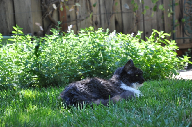 lindy in the grass