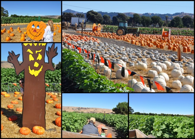 Spina Farm Pumpkin Patch