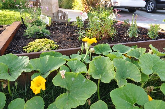 Pumpkin plant closeup