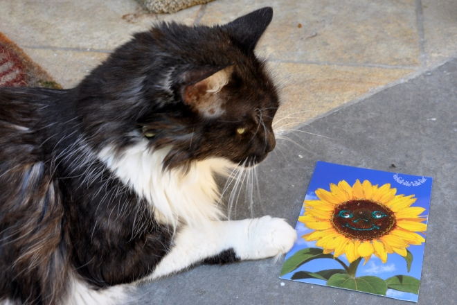 cat with postcard