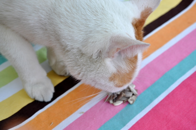 cat and seeds