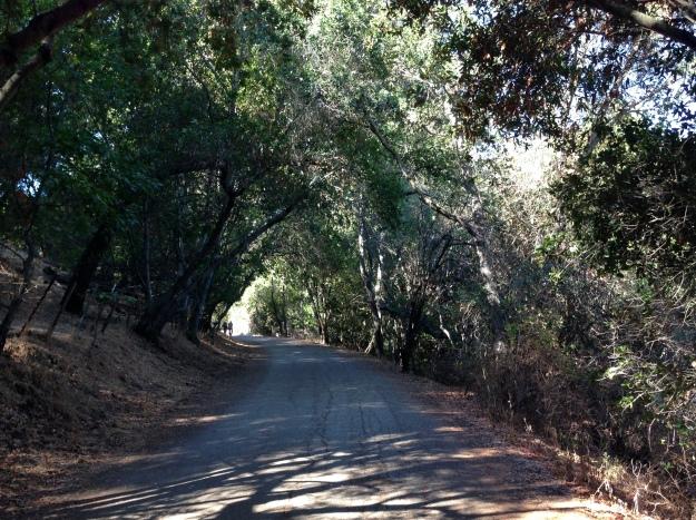 McAbee Road Trail head