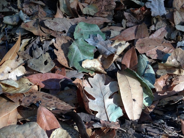 Potpourri of fallen leaves