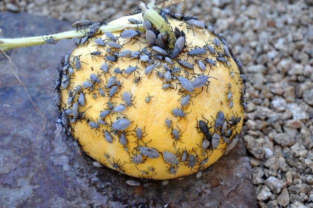 This pumpkin never had a chance