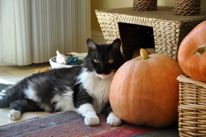 lindy with pumpkin