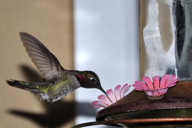 back garden feeder
