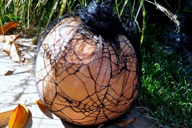 lacy pumpkin