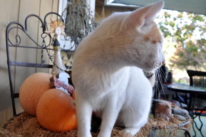 Pumpkin Mischief Maker