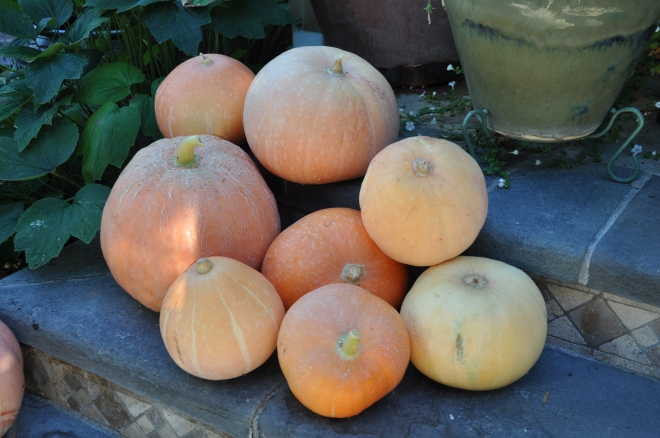 eight pumpkins