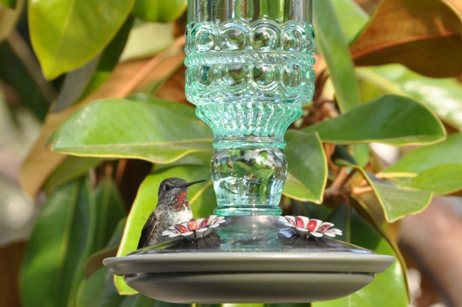 hummingbird green bottle feeder