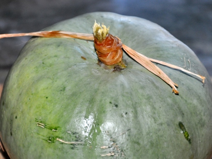 weeping pumpkin