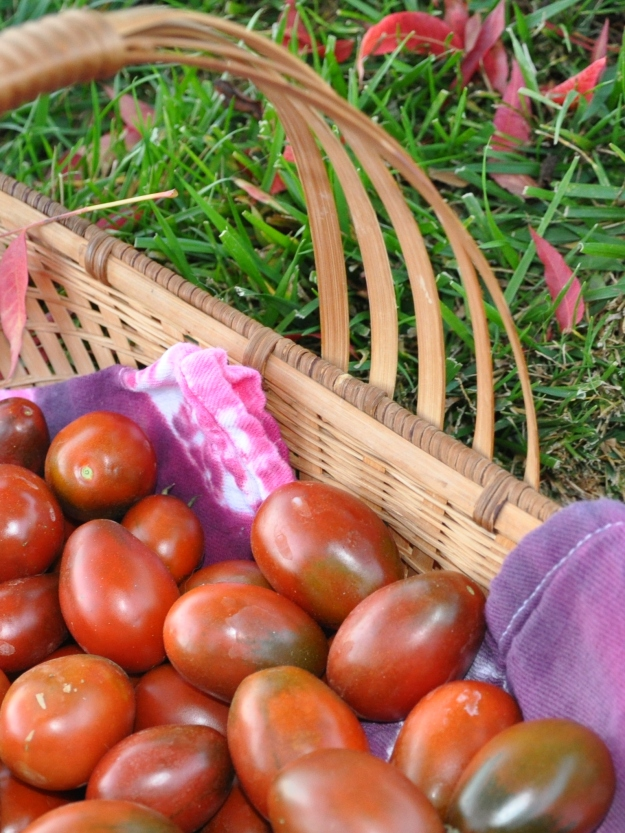 Roma tomatoes and Chinese Pistache leaves