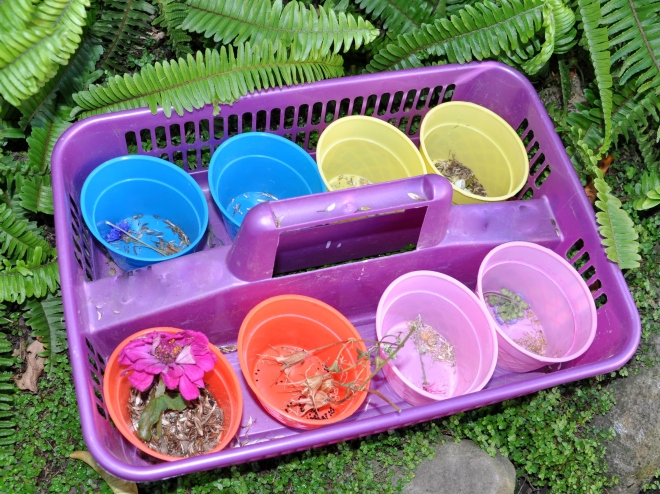 seed gathering tray