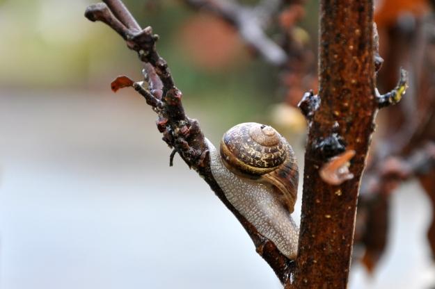 snail in Magnolia