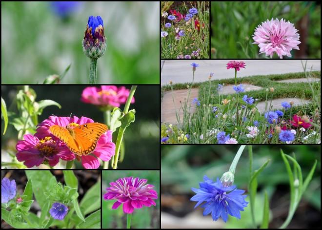 sidewalk garden flowers