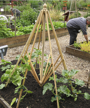 umbrellabeantrellis upcycle