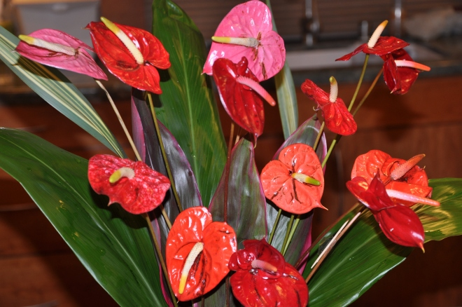 Mini Anthuriums