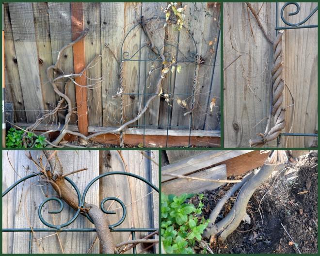 Dismantling the vine