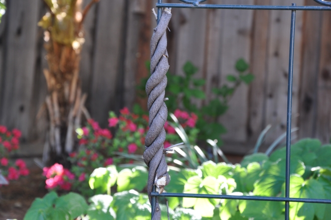 rope vines