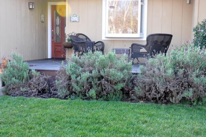 lavender near deck