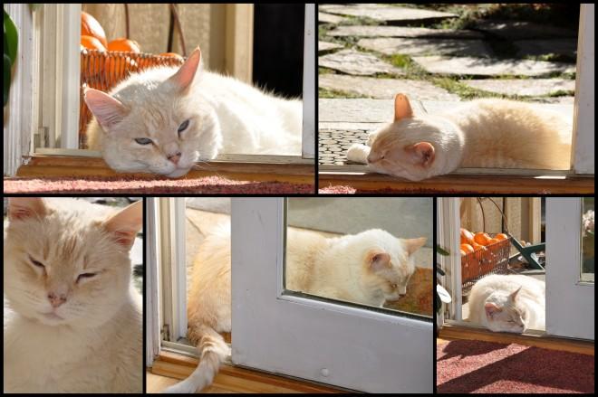 cat in the doorway