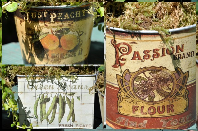 planting tins