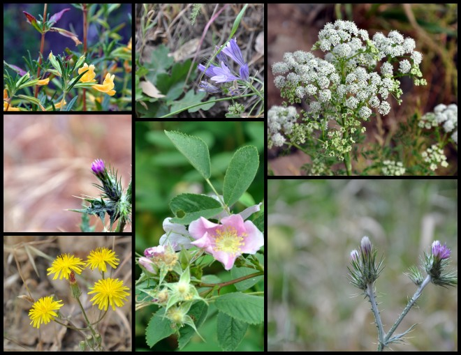 assorted wildfowers 2