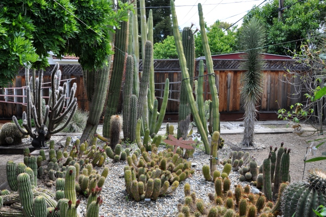 bruce's cactus garden
