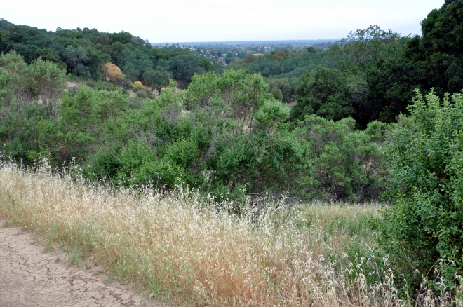 dry grass along the quicksilver trail