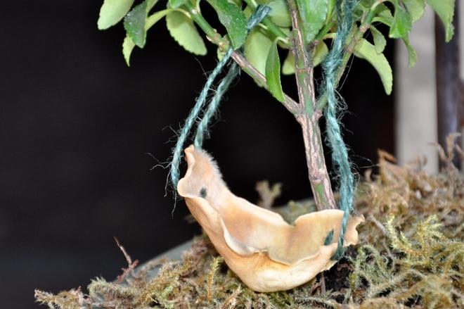magnolia petal hammock