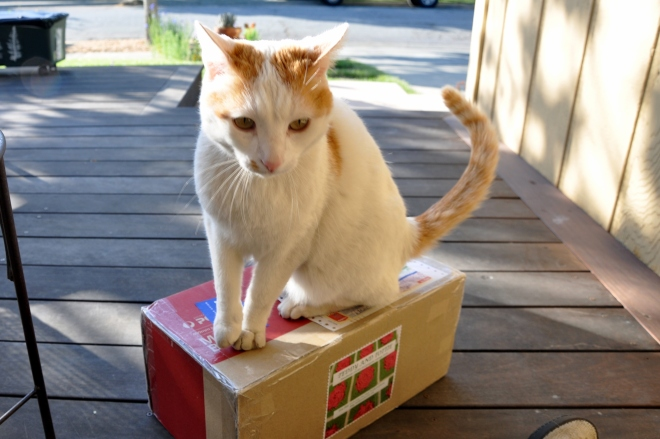 cat on a box