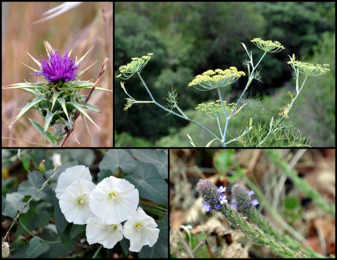 variety of wildflowers