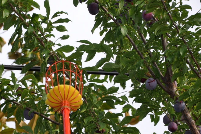 Telescoping Fruit Picker