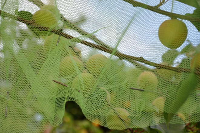 netting secured with nails