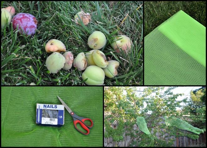 Macgyvered fruit tree
