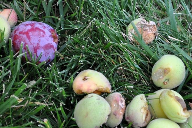 half eaten fruit